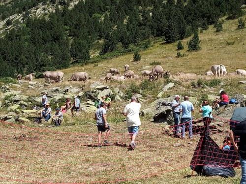 Descoberta de la ramaderia de muntanya