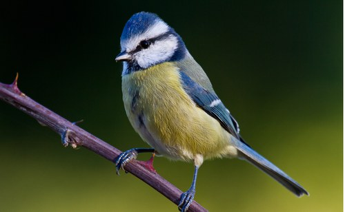 Exposició d'ornitologia