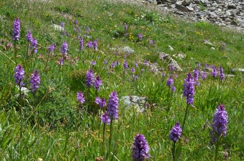 Jornada de la Biodiversitat d'Andorra